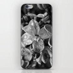'LILAC' iPhone & iPod Skin