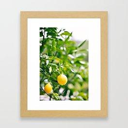 The lemon tree Framed Art Print
