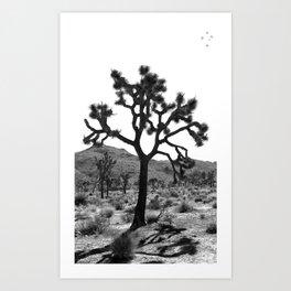 Joshua Trees Art Print