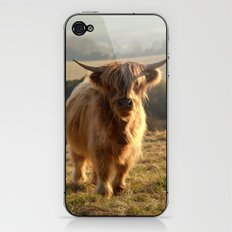 Young Highland Cow iPhone & iPod Skin