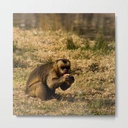 Monkey Business IV Metal Print