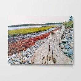 Beach Lines at Seawall Metal Print