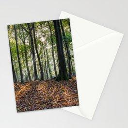 Beech Woodland Sunrise Stationery Cards