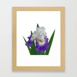 Iris 'Last Laugh' Framed Art Print