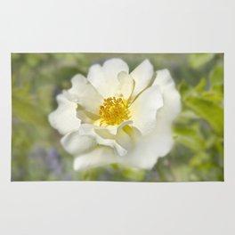 A white bloom. Rug