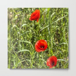 Summer Poppys Metal Print