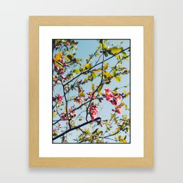 Spring Time Blossoms Framed Art Print