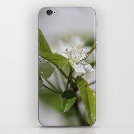 White cherry blossom iPhone Skin