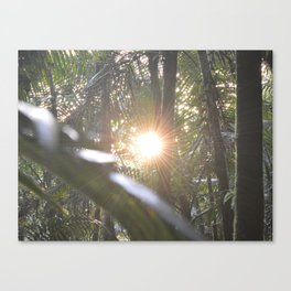 Sunset in the cloud forest  - near Tradewinds Trail - El Yunque rainforest PR Canvas Print