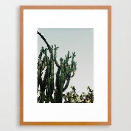 Cactus Dreams Framed Art Print