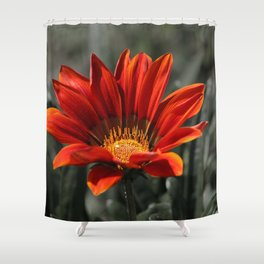 Red Gazania Flower Shower Curtain