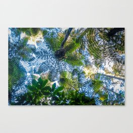 Giant ferns in redwood forest, Rotorua, New Zealand Canvas Print