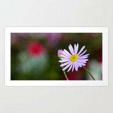 lone daisy III Art Print