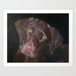 Inquisitive Chocolate Labrador Art Print