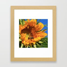 Sunny Bee Framed Art Print