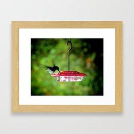 Hummingbird of Trinidad Framed Art Print