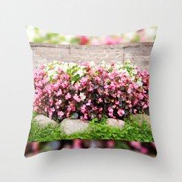 pink Begonia semperflorens clumps Throw Pillow