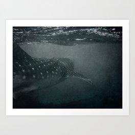 Whaleshark Art Print