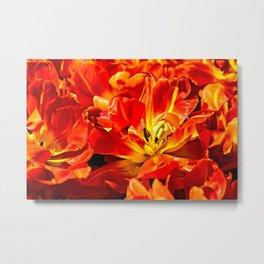 Macro view of red tulips Metal Print