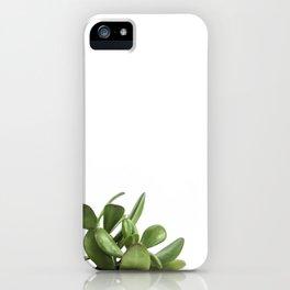Crassula Succulent iPhone Case