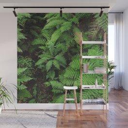 New Zealand ferns Wall Mural