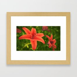 Lilium Flower Framed Art Print