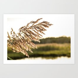 Amber Waves of Grain II Art Print