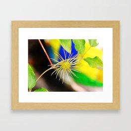 Clematis bloom is gone Framed Art Print