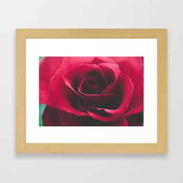 Close up red rose  Framed Art Print