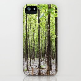 Teak Forest in Guanacaste, Costa Rica iPhone Case