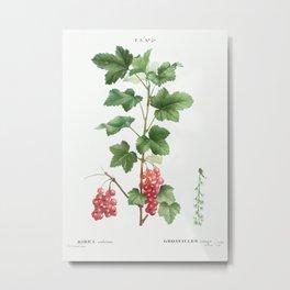 Redcurrant (Ribes rubrum) from Traité des Arbres et Arbustes que l'on cultive en France en pleine te Metal Print