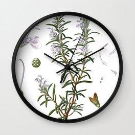 Nature, botanical print, flower poster art of Rosemary Wall Clock