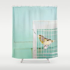 Finch against Turquoise Wall, Jerusalem Shower Curtain