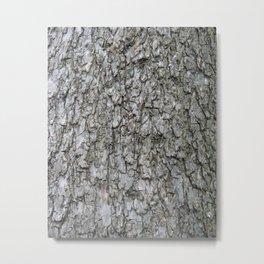 Quercus suber Metal Print