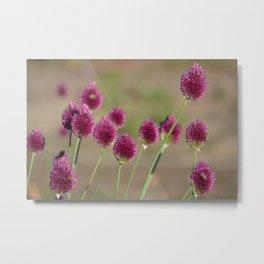 Pink Clovers Metal Print