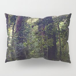 Sunrays in the Redwoods Pillow Sham