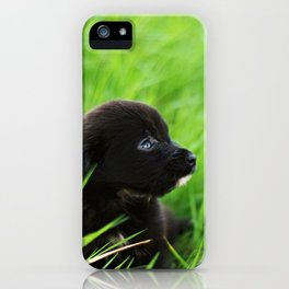 Shelter Puppy iPhone Case