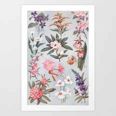 botany Art Print
