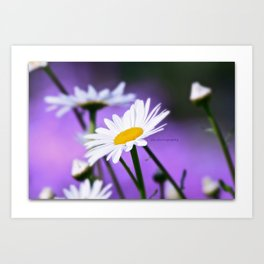 Exit 17 daisy * purple is the color of love Art Print