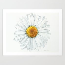 Watercolor Daisy Art Print