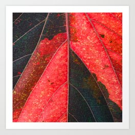 Red, Green  Art Print