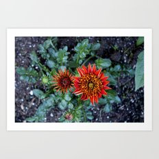 Red Flower in the front yard  Art Print