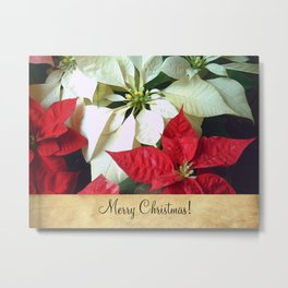 Mixed Color Poinsettias 2 Merry Christmas S2F1 Metal Print