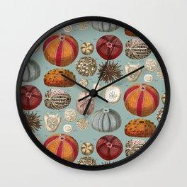 Vintage Molluscs Wall Clock
