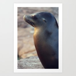 sea lion profile Art Print