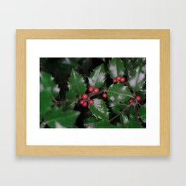 Holly berries Framed Art Print