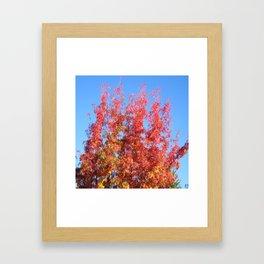 Fallbeauty/Colors in the sky Framed Art Print