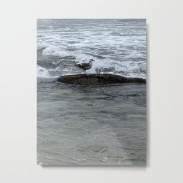 Surfin' Bird in Laguna Beach Metal Print