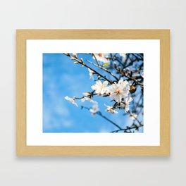Spring Cherry trees Framed Art Print