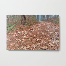 Frosty Forest Trail Metal Print